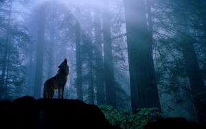 Волк воет в лесу
