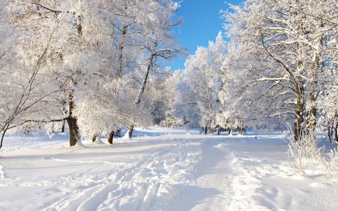 В лесу зимой