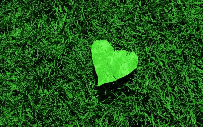 Зеленое сердечко на траве