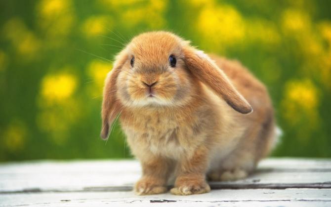 Кролик симпатяга