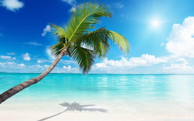 Пальма над морем