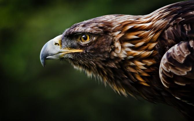 Взгляд орла