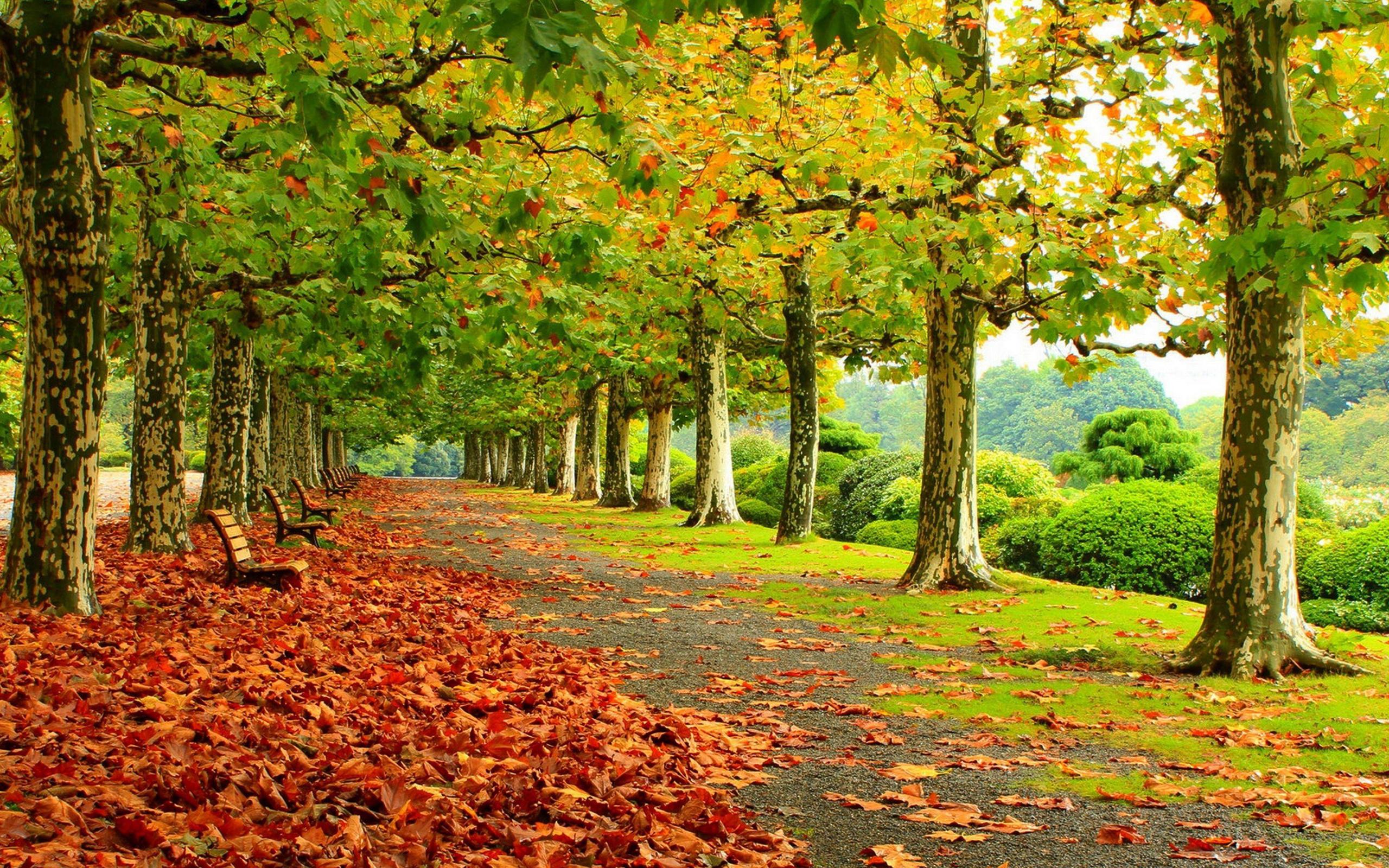 Осень в парке обои для рабочего стола, картинки и фото ...