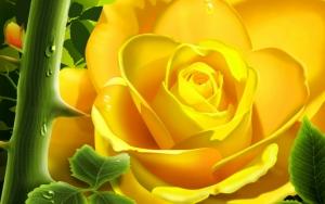 Желтая роза