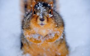 Белка в снегу