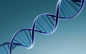 3d ДНК
