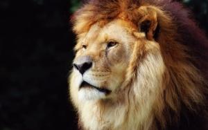 Грива льва