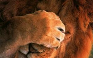 Лапа льва