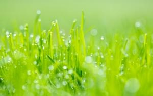 Вода на траве