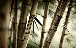 Деревянный бамбук