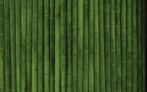 Красивый бамбук