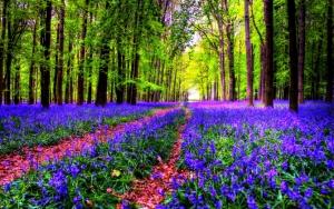 Цветочная поляна в лесу