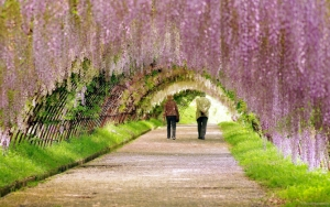 Весна в японии