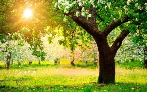 Природа весной