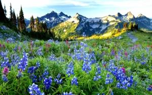 В горах весной