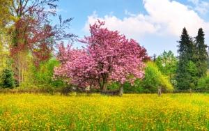 Красивая весна