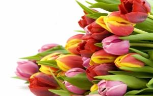 Разные тюльпаны