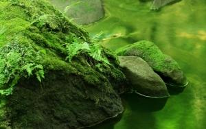 Ручей в зеленом лесу