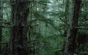 Дремучий лес