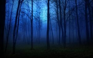 Ночь в лесу