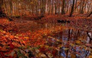 Листва в осеннем лесу