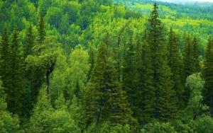 Сибирский лес