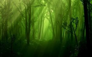 Тенистый лес