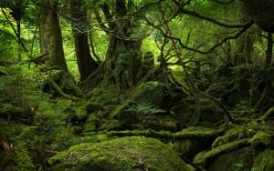 Мох в лесу