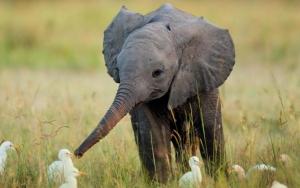 Милый слоненок