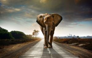 Красивый слон