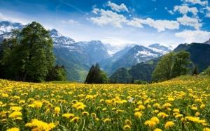 Одуванчики в Альпах