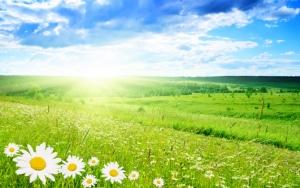 Поляна цветов летом