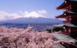 Сакура и гора Фудзияма