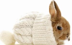 Кролик в шапке