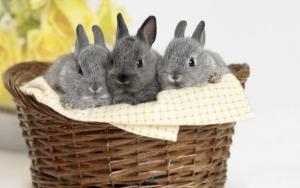 Серые крольчата