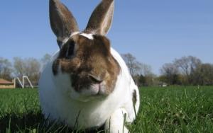 Суровый кролик