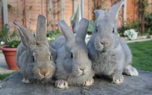 Любопытные кролики