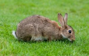 Кролик или заяц? :)