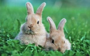 Кролики на траве