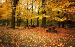 Столики в лесу