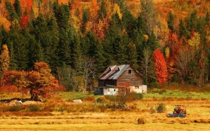 Дом в осеннем лесу