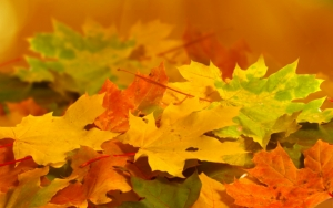Красивая осенняя листва