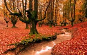 Речка в осеннем лесу