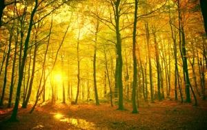 Закат в осеннем лесу
