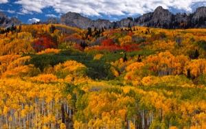 Вид на осенний лес