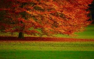 Красное осеннее дерево