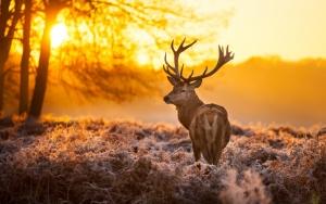 Рогатый олень