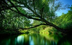 Дерево над рекой