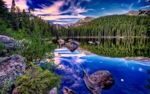 Сосновый лес у реки