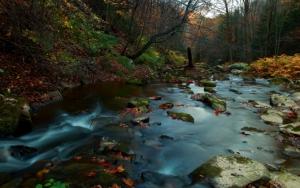 Маленькая лесная речка